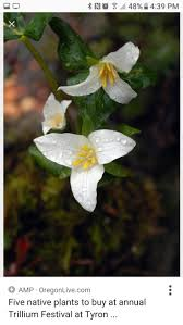 minnesota native plant society 27 best native plants for the northwest images on pinterest
