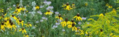 native wisconsin plants wisconsin state herbarium u2013 department of botany u2013 uw u2013madison