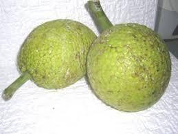 cuisiner le fruit de l arbre à arbre à définition et recettes de arbre à supertoinette