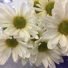 flowers express white nationwide shipping with flowers express mwf