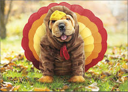 5 pets who thanksgiving sandstone animal hospital