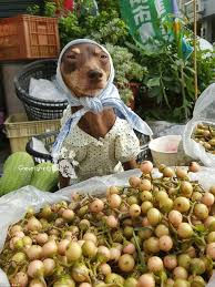 taiwan dog sells fruit while wearing high end fashion and takes
