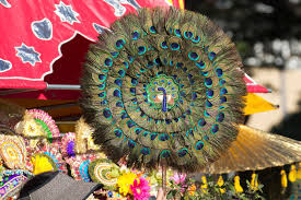 peacock feather fan peacock feather fan editorial image image of beauty 49354990