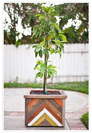 design of wood planter boxes for big plants homesfeed