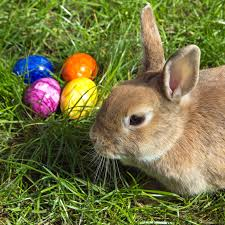 file easterbunny 1 jpg wikimedia commons