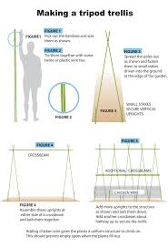 tripod bamboo trellis for pole beans summer garden pinterest