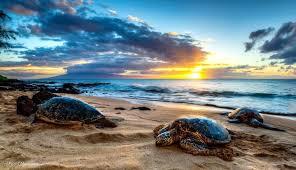 hawaii photographers 17 breathtaking photographs of hawaii