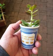 cup o succulent jpg