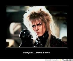 David Bowie Meme - th id oip 7z8nb9hxhjzcu1grtscfyqhago