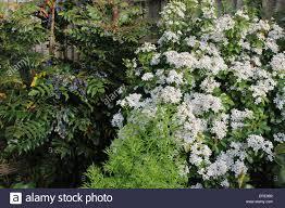 england dorset garden flowers a corner of a country garden showing