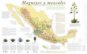 Oaxaca Mexico Map Of The 200 Agave Species In The World 150 Are Native To Mexico
