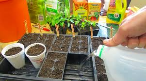 the secret trick to germinating seeds