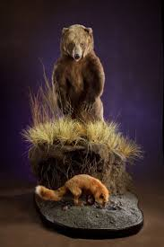 42 best bear mounts images on pinterest taxidermy trophy rooms