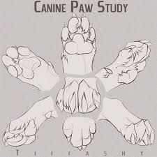 Tutorials By A 63 Best Creature Anatomy Paws Images On Pinterest Animal