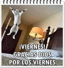 imagenes graciosas viernes imágenes de feliz viernes con frases chistosas para el fin de semana