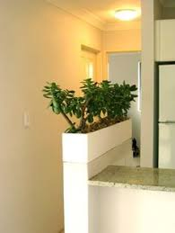 planter box of mother in law u0027s tongue for a corporate office room