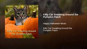 kitty cat sneaking around the pumpkin patch youtube
