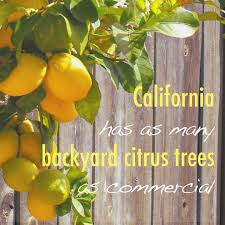read this if you backyard citrus notes from a sunset garden