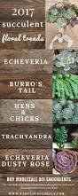 best 25 wholesale succulents ideas on pinterest wholesale