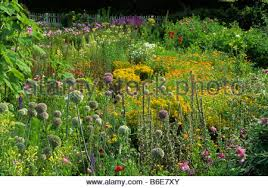 traditional cottage garden in late summer with cat stock photo