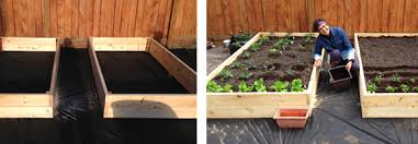 learn how to grow your own vegetables