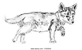 line drawing puppy stock photos u0026 line drawing puppy stock images