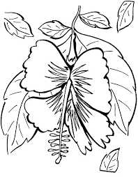 hibiscus of hawaii colouring page colouring tube