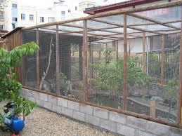 cozy 4 backyard aviary ideas on aviary finches outdoor aviary
