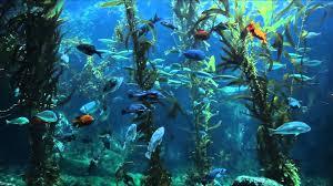 3 hours of relaxing aquarium fish coral reef fish tank u0026 relax