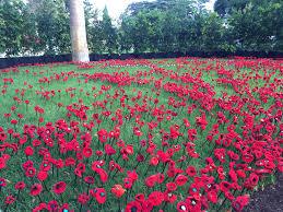 wrap up u2013 melbourne international flower and garden show 2015