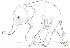 cute baby elephant coloring printable pages riding