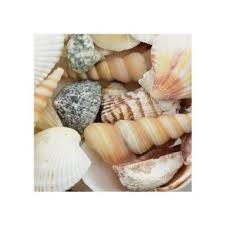 assorted seashells cheap assorted seashells find assorted seashells deals on line at