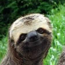 Sloth Meme Generator - smiling sloth meme generator