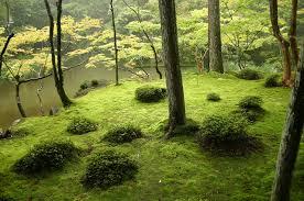 beautiful backyard meditations beautifulnow