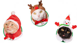 cat christmas adorn your cat with adorable headgear this christmas