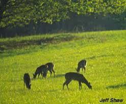 Reflective Deer Blind Whitetail Sensory What Do Deer Really See Deer Hunting Realtree