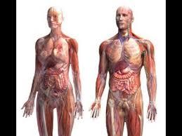 Anatomy The Human Body Anatomy And Physiology Of Human Body Youtube