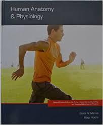 Human Anatomy And Physiology Marieb Hoehn Human Anatomy Physiology Th Editio Human Anatomy And Physiology By