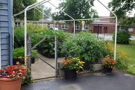 Horse Manure Vegetable Garden by Using Compost And Manure Teas In The Home Garden Vegetable Gardener
