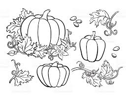 pumpkin vector drawing set isolated outline vegetable plant stock