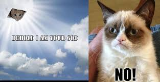 Grumpy Cat Meme No - 18 extremely funny grumpy cat no memes sayingimages com