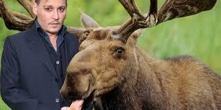 kevin smith u0027s next movie sees johnny depp eaten by a moose it u0027s