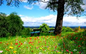 wallpaper flowers landscape bench tree green hd nature 1741