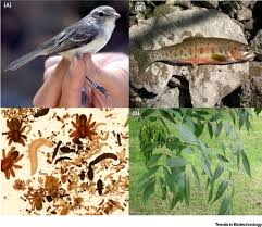 a bigger toolbox biotechnology in biodiversity conservation