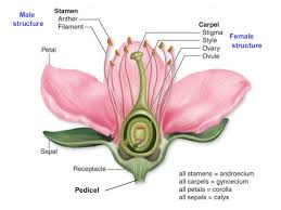 Style Flower Part - biology form 5 chapter 4 4 5 reproduction in flowering plants
