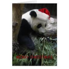 panda bear greeting cards zazzle