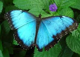 index of images nature insects butterfly