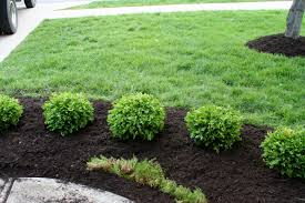 Types Of Garden Trees Types Of Bushes For Landscaping A Tree And Shrub Guide Infographic