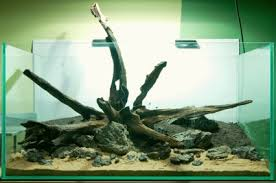 aquascaping layouts with stone and driftwood your tanks norbert sabat practical fishkeeping magazine