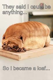 Orange Dog Meme - i m a loaf dog what breed is it